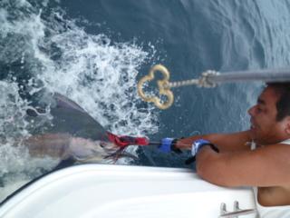 浜名湖のK艇さんから 8本目の画像が届きました!【カジキ・マグロ トローリング】_f0009039_964720.jpg