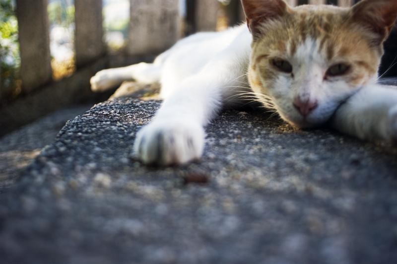 鞆の浦の猫_c0214542_22371959.jpg
