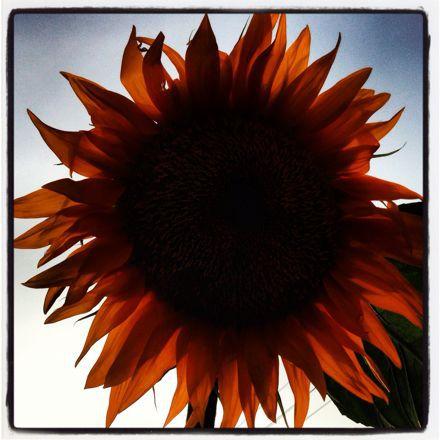 夏の終わりに考えたこと「僕にとってブログとは」_c0060143_1255229.jpg