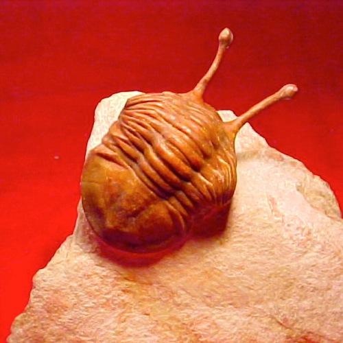 亡き王女のための三葉虫丼/順調長調に弱っていくためのガラナ汁及び三葉虫丼の概略とベラスケスのゴンベッサ・コンベルソ問題_c0109850_1692032.jpg