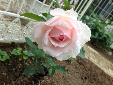 ガーデン復活_f0182167_2328144.jpg