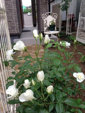 ガーデン復活_f0182167_23291826.jpg