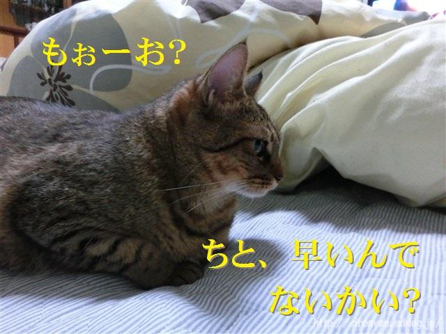 a0159490_1635589.jpg