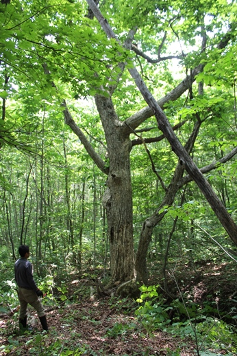 今年の伐倒製材見学会_f0227395_2285287.jpg