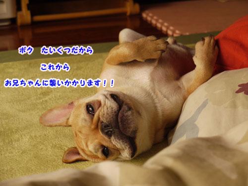 b0134197_033395.jpg