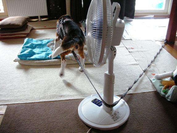 恐怖! ついてくる扇風機!_e0115812_22443494.jpg