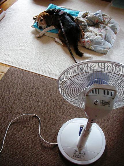 恐怖! ついてくる扇風機!_e0115812_22463556.jpg