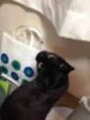 猫のための玄関網戸ドア_b0255217_12375785.jpg