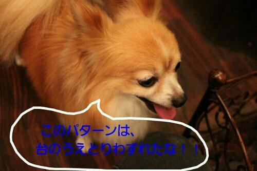 b0130018_0405466.jpg