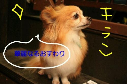 b0130018_0412947.jpg
