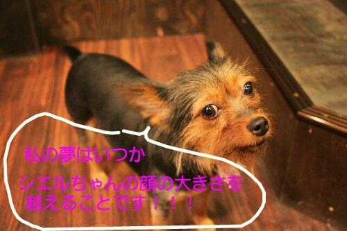 b0130018_0454410.jpg