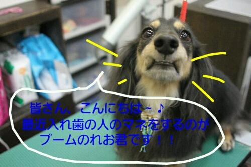 b0130018_2012431.jpg