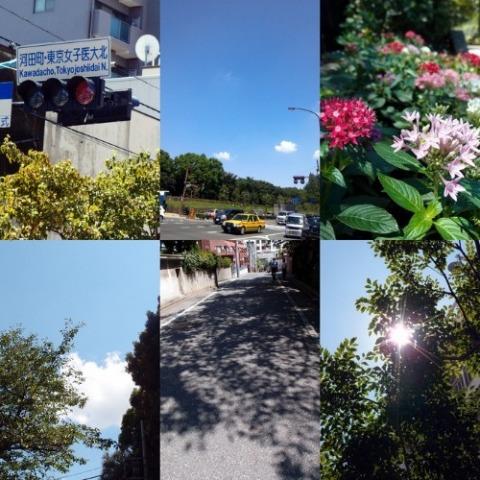 夏から秋へ_a0231828_23432869.jpg