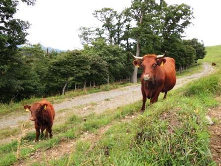 いわいずみ短角牛の「べこ守り」コースケさんに会いに行く_b0206037_16204817.jpg