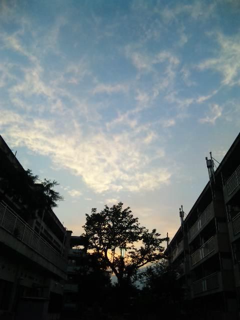 blog:青山の夕暮れ_a0103940_2350311.jpg