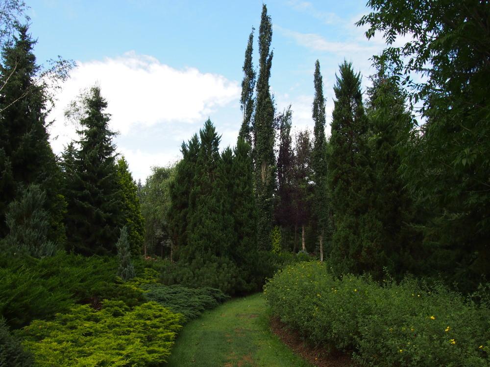 北海道ガーデン街道を訪ねて(7)針葉樹のガーデン・真鍋庭園_f0276498_22362139.jpg