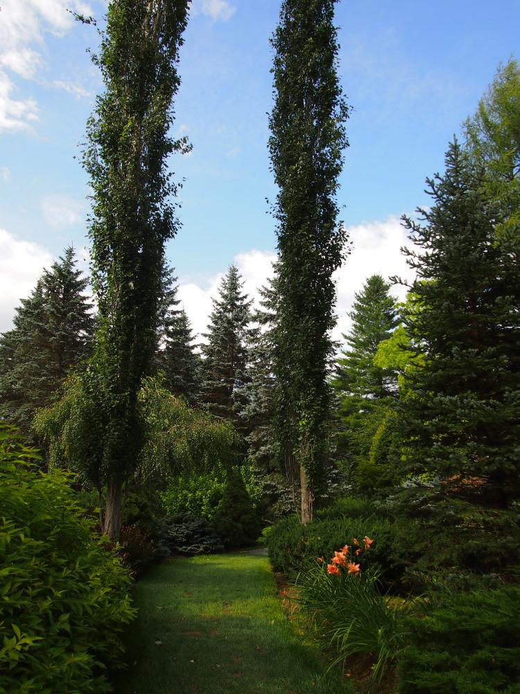 北海道ガーデン街道を訪ねて(7)針葉樹のガーデン・真鍋庭園_f0276498_22391390.jpg
