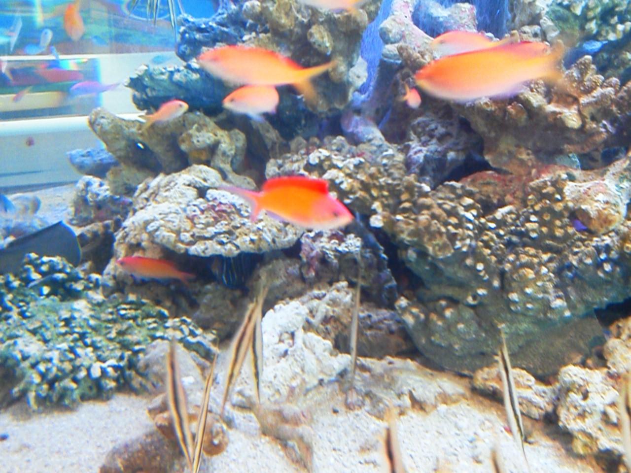 銀座の水族館、高校雑談サロン_a0063907_18581929.jpg