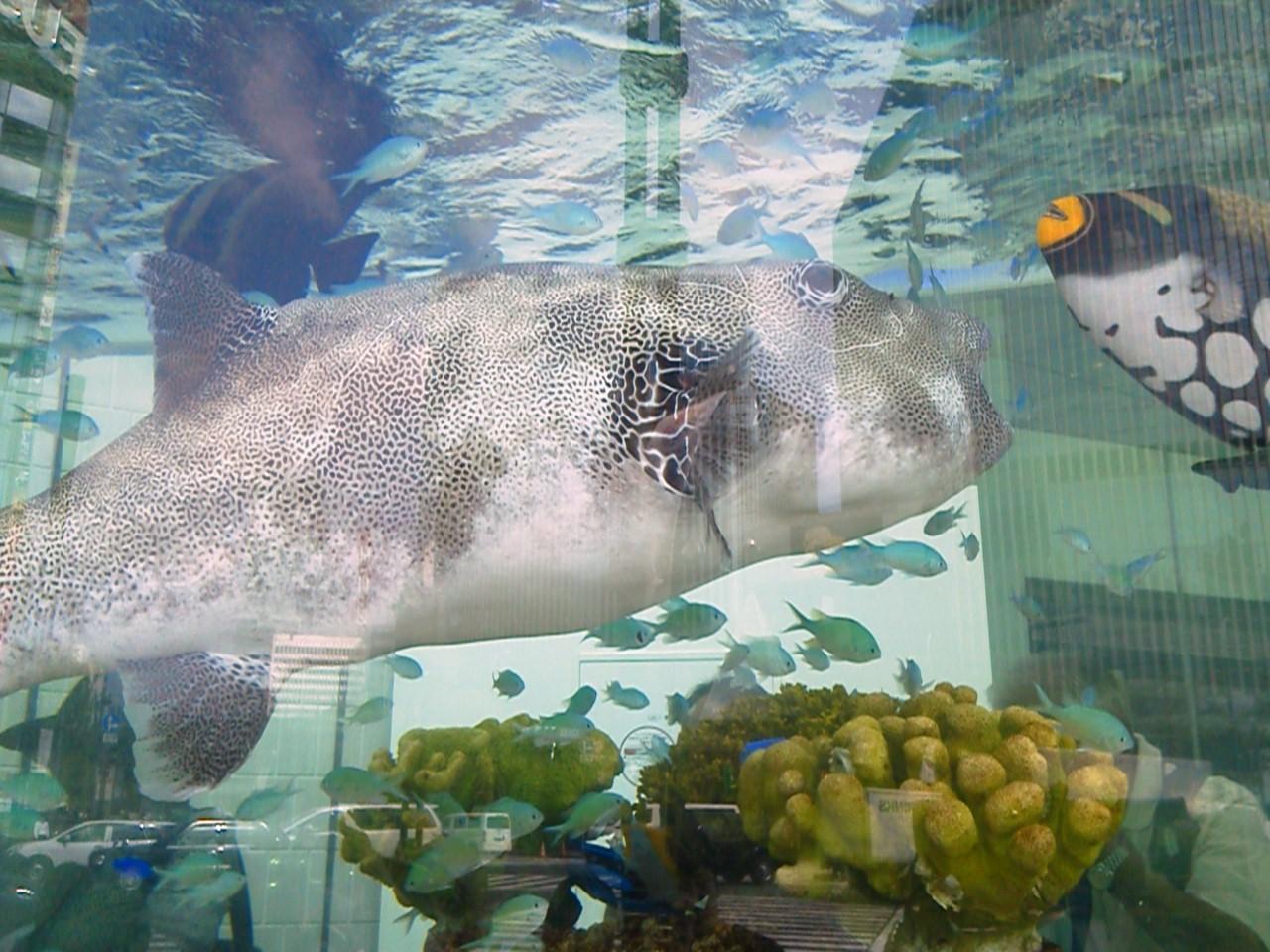 銀座の水族館、高校雑談サロン_a0063907_1859938.jpg