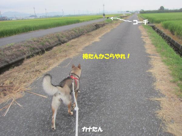 f0143123_20401323.jpg