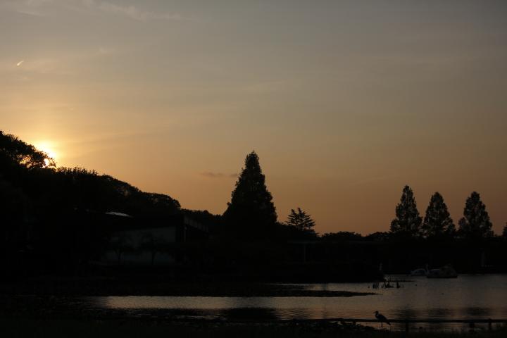 夕暮れ・お散歩・ひがしやま  【東山動植物園 夏の開園延長】_f0253927_21322898.jpg