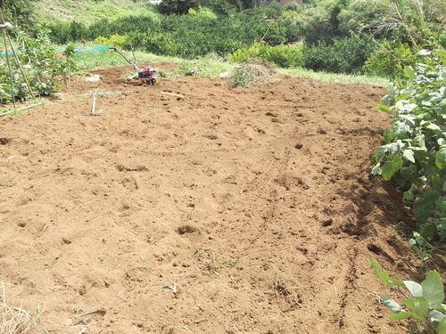 残暑厳しい....秋冬野菜畑の耕作!_b0137932_16231561.jpg