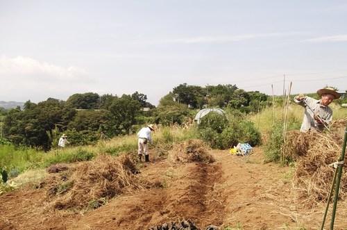 残暑厳しい....秋冬野菜畑の耕作!_b0137932_1649249.jpg