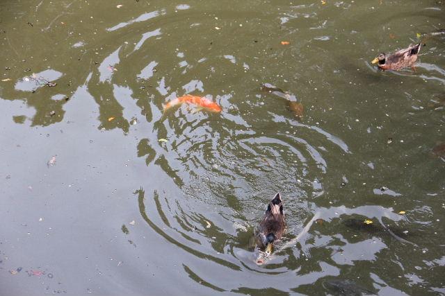 【宇佐神宮】 その2 菱形池、御霊水、下宮_c0011649_8263612.jpg