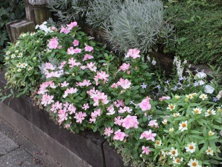 夏の終わりの花の様子_a0243064_10453226.jpg