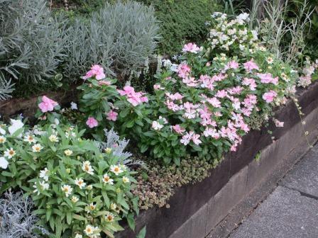 夏の終わりの花の様子_a0243064_10455753.jpg