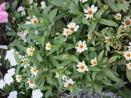 夏の終わりの花の様子_a0243064_10464252.jpg