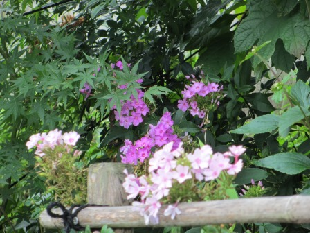 夏の終わりの花の様子_a0243064_10471525.jpg