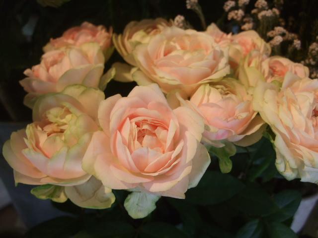 オークリーフ(山の花も・・・)_f0049672_13543022.jpg