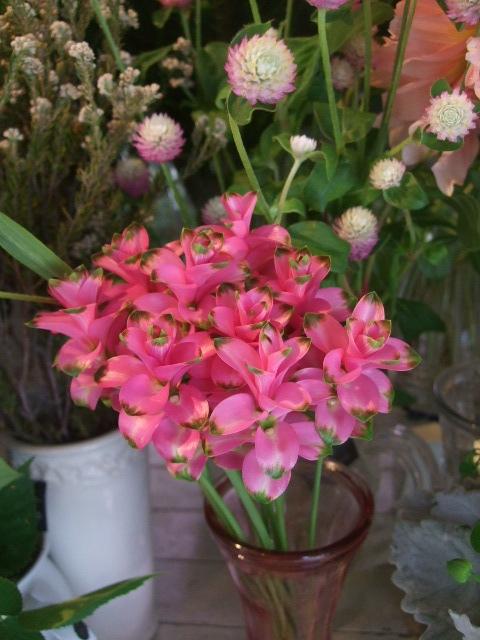 オークリーフ(山の花も・・・)_f0049672_13545655.jpg