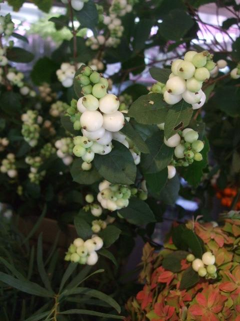 オークリーフ(山の花も・・・)_f0049672_13553738.jpg