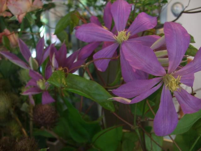 オークリーフ(山の花も・・・)_f0049672_13562745.jpg