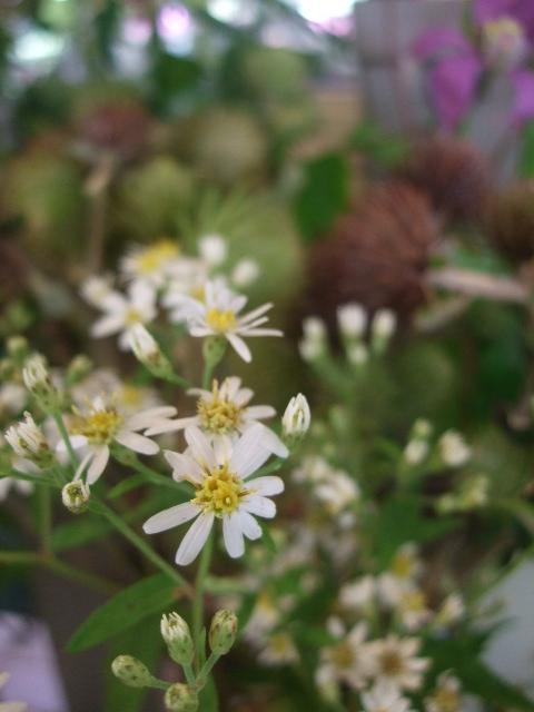 オークリーフ(山の花も・・・)_f0049672_13564882.jpg