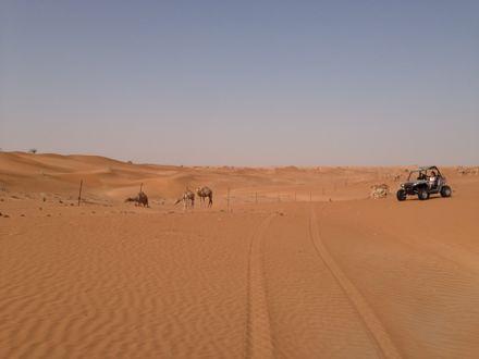 今朝は、砂漠なう。_e0066474_13425180.jpg