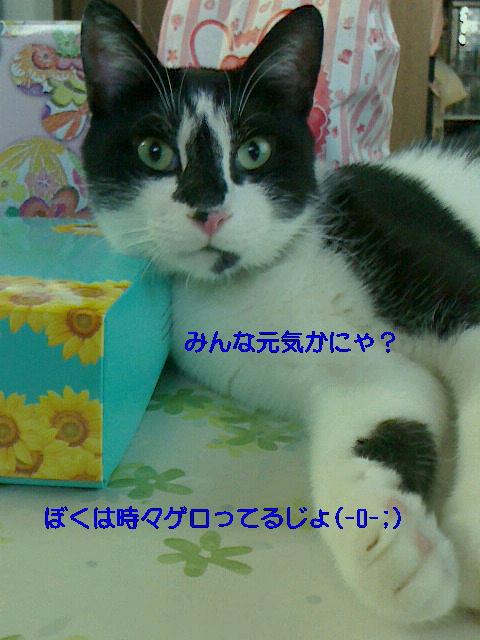 f0164575_1353453.jpg