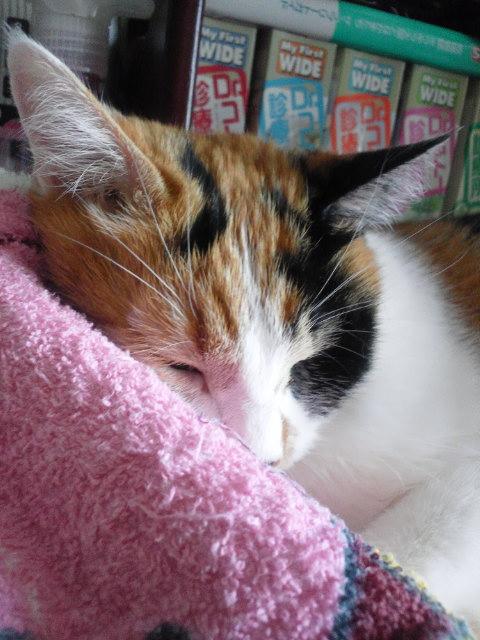 猫達_b0112380_15263789.jpg