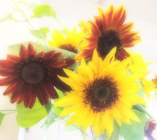 8月最後のお花_f0202682_18484113.jpg