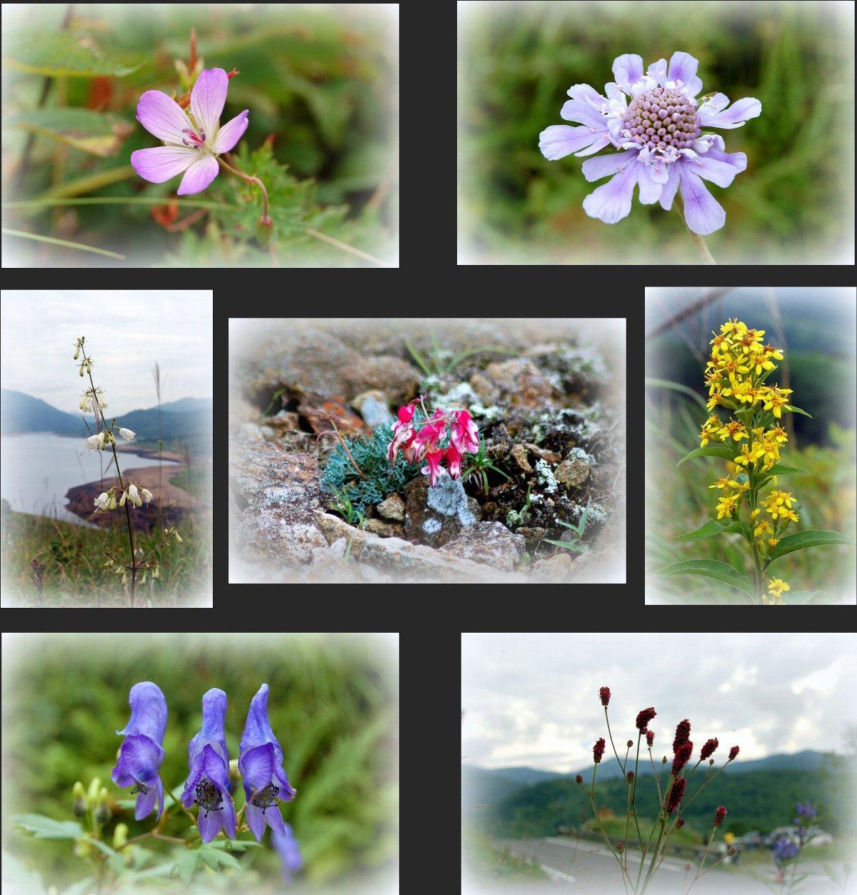 野反湖の花たち_c0057390_0261932.jpg
