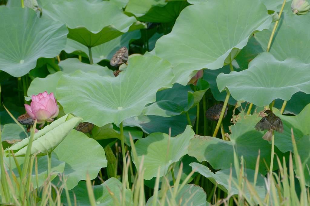 朝のカワセミ&スズメ/??/池を渡る蛇/朝焼け・夕焼け/月面_b0024798_20362872.jpg