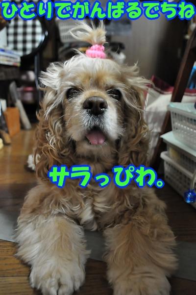 b0067012_0351680.jpg