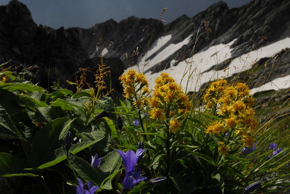 """2013年8月 『劔岳に登る』 August, 2013 \""""Mt. Tsurugi\""""_c0219616_15235258.jpg"""