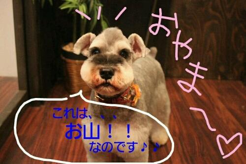b0130018_042456.jpg