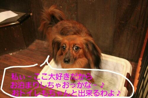 b0130018_084155.jpg