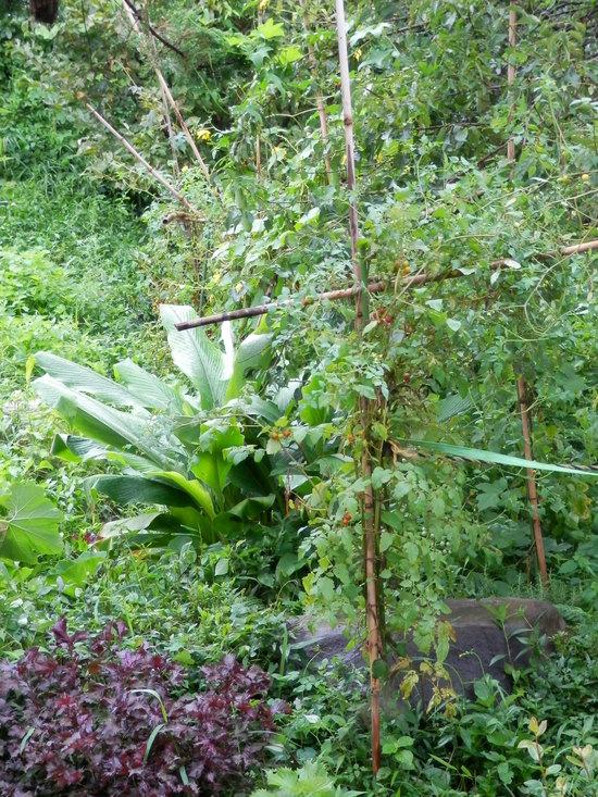 植物の喜び。_a0125419_13393953.jpg