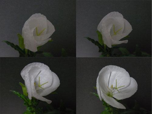 a0214919_828584.jpg
