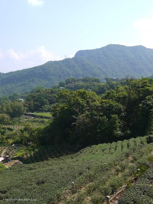 台湾の茶畑へ_a0169924_1528034.jpg